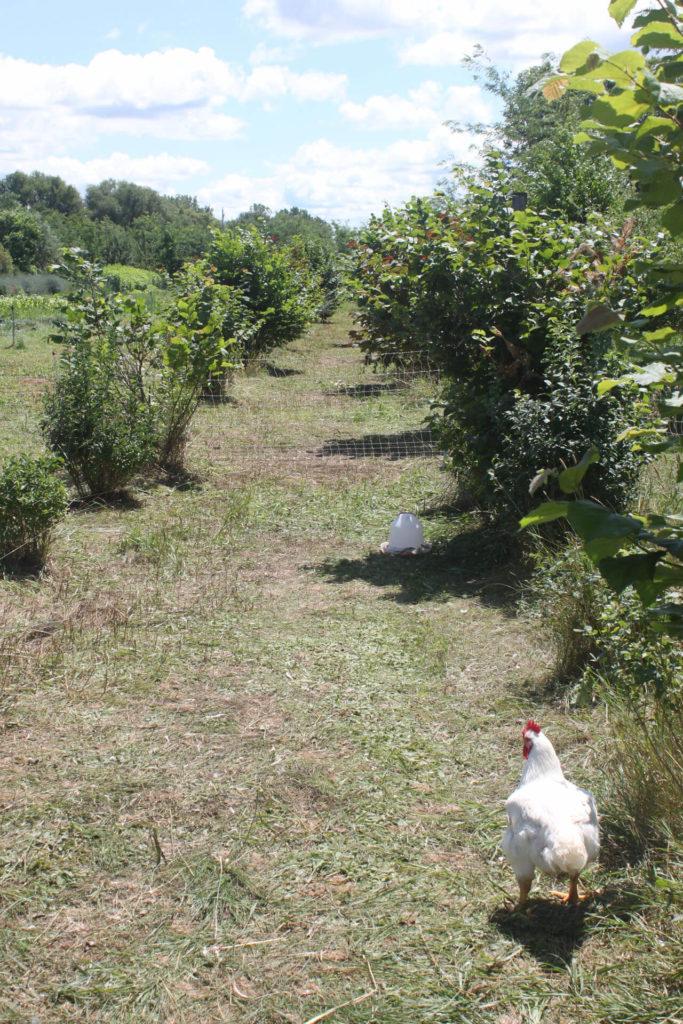 agriculture biologique de proximité