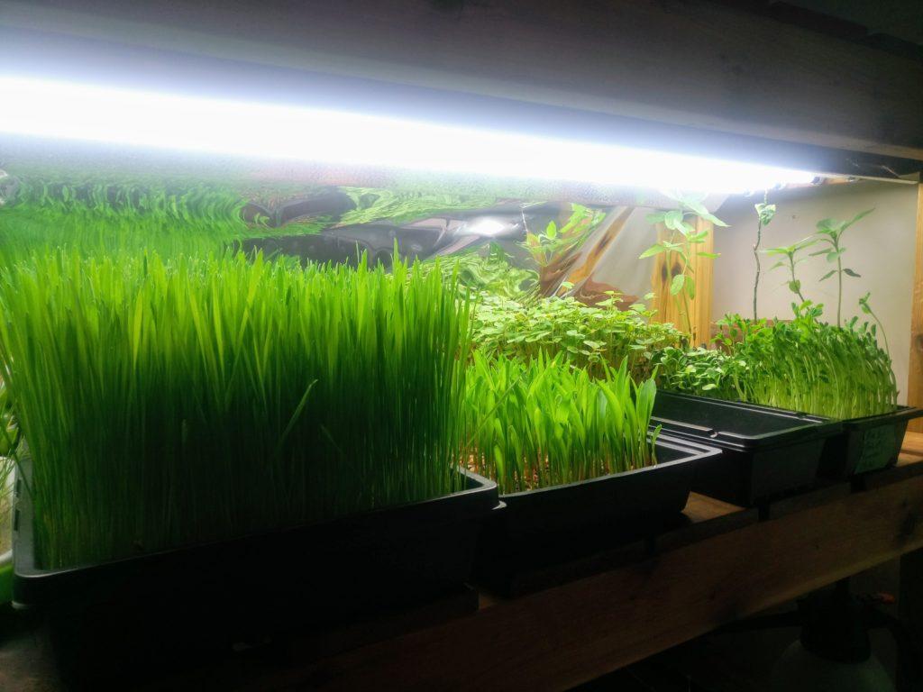 Lampes de croissance pour semis