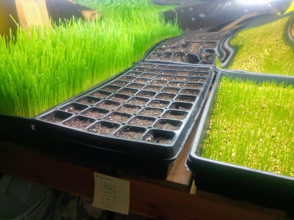 Semis dans des caissons spécialisés